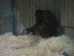 IMG_2038 [1024x768].JPG (yerseypijpelink) Tags: rhenen ouwehands dierentuin yersey