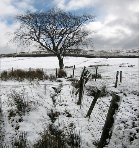 Upper Kelburn tree in snow