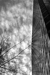 looking up (saba v.) Tags: sky bw building tree lines clouds perspective
