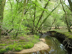 Highland Water, New Forest, Hampshire, England (east med wanderer) Tags: trees england forest nationalpark spring stream hampshire newforest beech lyndhurst highlandwater greatbritishlandscape