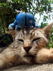 siesta ... (5thLuna) Tags: cat gundam 猫 ねこ straycat ネコ homelesscat gandam acguy sdgundam 野良 のらねこ 捨猫