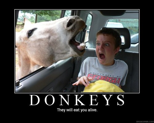 Donkeys-Eat-You-Alive