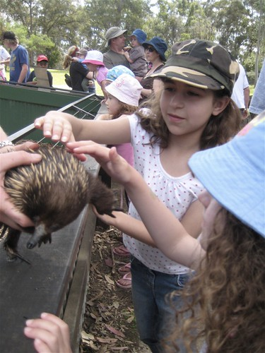 Patting and Echidna