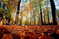 Fallen (BB (O.)) Tags: blue autumn trees brown paris france green fall leaves playground garden gold nikon october low romance bb jardinduluxembourg pespective o d40 nikonstunninggallery holidaysvacanzeurlaub thegoldenmermaid thegardenofzen