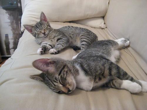 kitties sleep