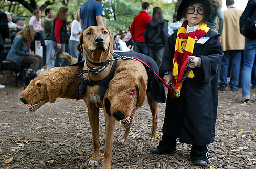 Harry Potter perro Fluffy
