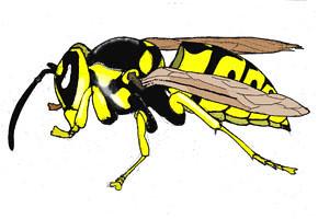 Yellow Jacket Wasp