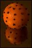 Orange - One or two? (atranswe) Tags: christmas orange sweden sverige whatilove jul clove halland falkenberg apelsin dsc4718 20071223 picturepages citrit nikon40d kryddnejlikor zanzibarredhead