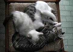 gattini (Manuela G*) Tags: animals cat puppy gattini