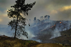 Apocalyptic visions 2 (dalinean) Tags: tree fire destruction smoke apocalypse sigma sd10 soe treesubject spiritofphotography