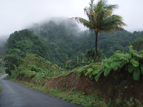 Rain forest road