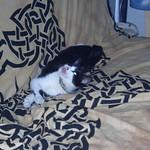 CIMG2208 thumbnail