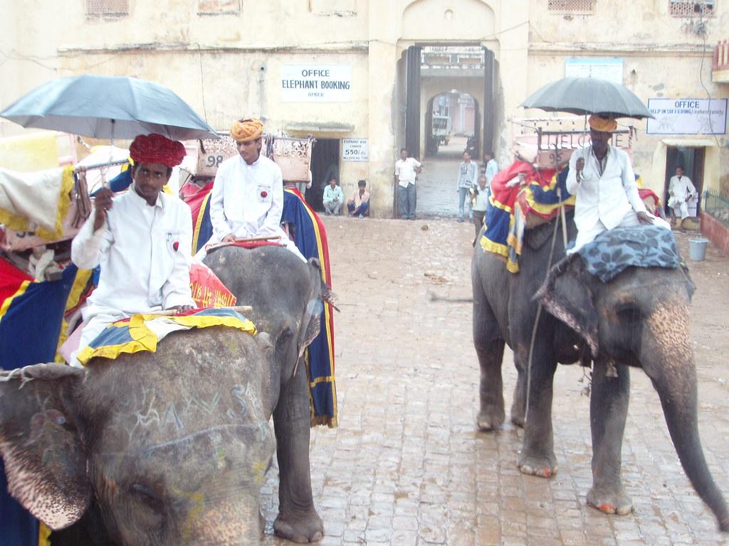 Los elefantes del Amber Fort