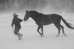 Walking the Horse (Soller Photo) Tags: ranch winter horse woman snow newyork storm cold nature weather museum person woods hand wind michigan farm freezing blowing freeze farmer amnh rancher equestrian trot stallion winterstorm americanmuseumofnaturalhistory horsefarm galope abigfave anawesomeshot aplusphoto diamondclassphotographer thefinalcrown sollerphoto serenityfarm