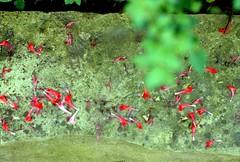Houston Arboretum (The 4/30 Murders) Tags: film kodak houston rangefinder canonet portra400vc canonetgiiiql17