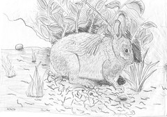 rabbit_1992sm
