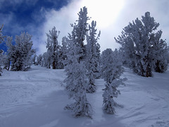 Heavenly Trees (Swanee 3) Tags: trees snow laketahoe snowskiing heavenlyvalley swanee swanee3