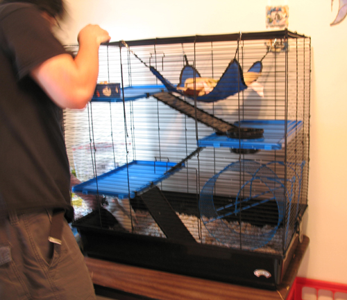Ed finishing setting up the new cage!