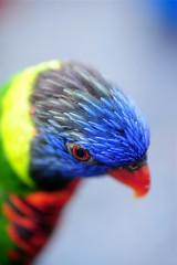 Kuala Lumpur Bird Park 2008 (8)