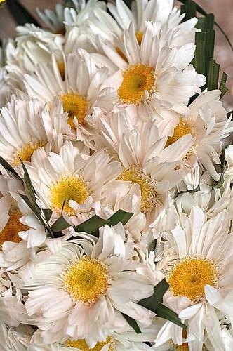Daisy ALR_0046b