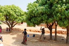 DSC06780_DxO_Bildgröße ändern (Jan Dunzweiler) Tags: afrika madagaskar fahrradreise radreise momotas africanbikers jandunzweiler mango mangobaum manguier