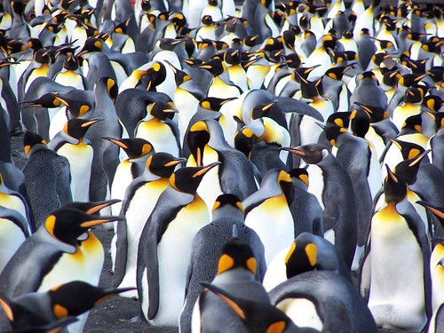 Loans For Really Bad Credit >> All black penguin really stands out in a crowd