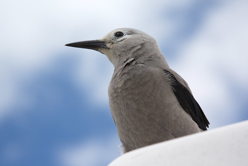 Clark's Nutcracker at Paradise by The Bacher Family