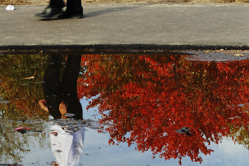 Fall Reflections 4201
