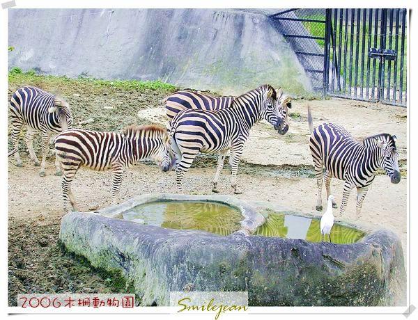 zoo28