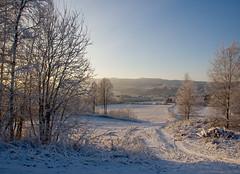 December (Kristia.n) Tags: winter snow tree blueribbonwinner scenicsnotjustlandscapes