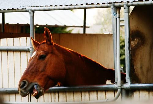 Why, hello, Horse.