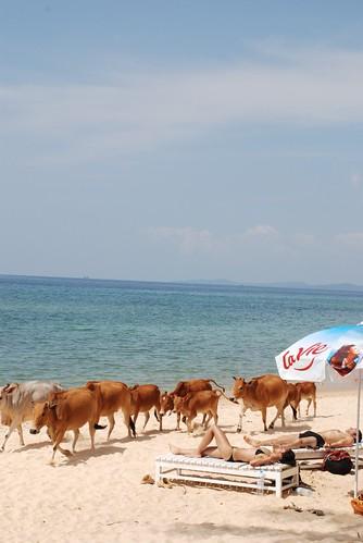 Thuan Kieu resort - Coco beach - Phu Quoc