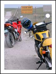 Should we go or should we stay away? (hz536n/George Thomas) Tags: vfr800 motorcycle yellow red triumph honda fall oklahoma canonef70200mmf4lusm autumn 2007 hz536n bison tallgrassprairiepreserve tallgrass prairie sign warning