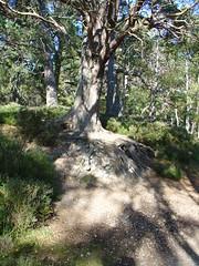 loch an eilean (gmj49) Tags: trees pine scotland scottish highland scot appenninosettentrionalealpinatura gmj49 shareyourtalent bestofbritishnature photosrus peachofashot