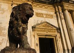 Lion of Leon