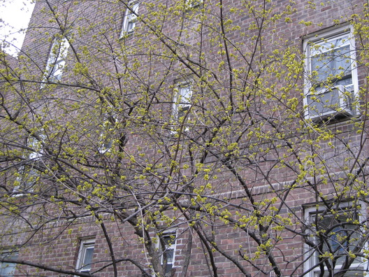 Signs of Spring Cobble Hill