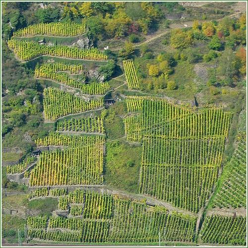 Weinberge am Mittelrhein