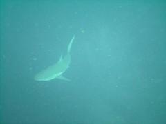 PICT0070 (JoseQ) Tags: blue mar hole great tiburones buceo caribe submarinismo tiburón