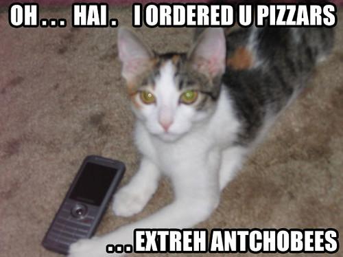 antchobees