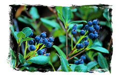 Autumns Berries!! (photobud606-Daves Photo Picts~Photography & Light) Tags: autumn berries my mywinners platinumphoto winnerstrophy firsttheearth flowercrazzzzzzzy citritgourp