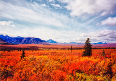 Autumn Tundra (brentdanley) Tags: autumn mountain fall alaska nationalpark scanned denali tundra denalinationalpark naturesfinest tonemap diamondclassphotographer flickrdiamond goldstaraward