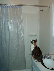 showercurtain.jpg (semibold) Tags: animals lucy kitties
