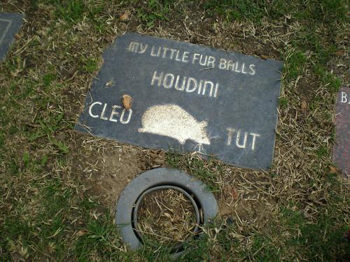 Cleo-Houdini-Tut