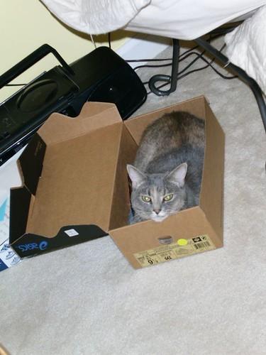 pip in box