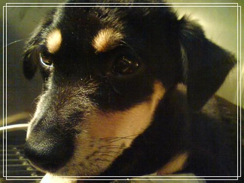 我的狗DSC01147富貴