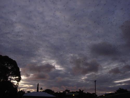 ataque nocturno de murcielagos