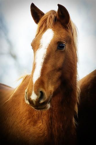 gathering mares 337