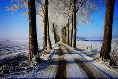 Somewhere on the road to Explore (buteijn) Tags: christmas winter cards sneeuw houten buteijn