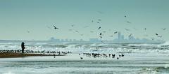 Skyline of Scheveningen (Rene van Rijn) Tags: beach netherlands skyline scheveningen noordwijk