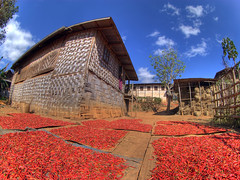 Red Hot Chilli Peppers (Rafski) Tags: red lake hot 20d rural farm burma fisheye peppers myanmar inle chilli hdr peleng kalaw 3xp flickrslegend lphot